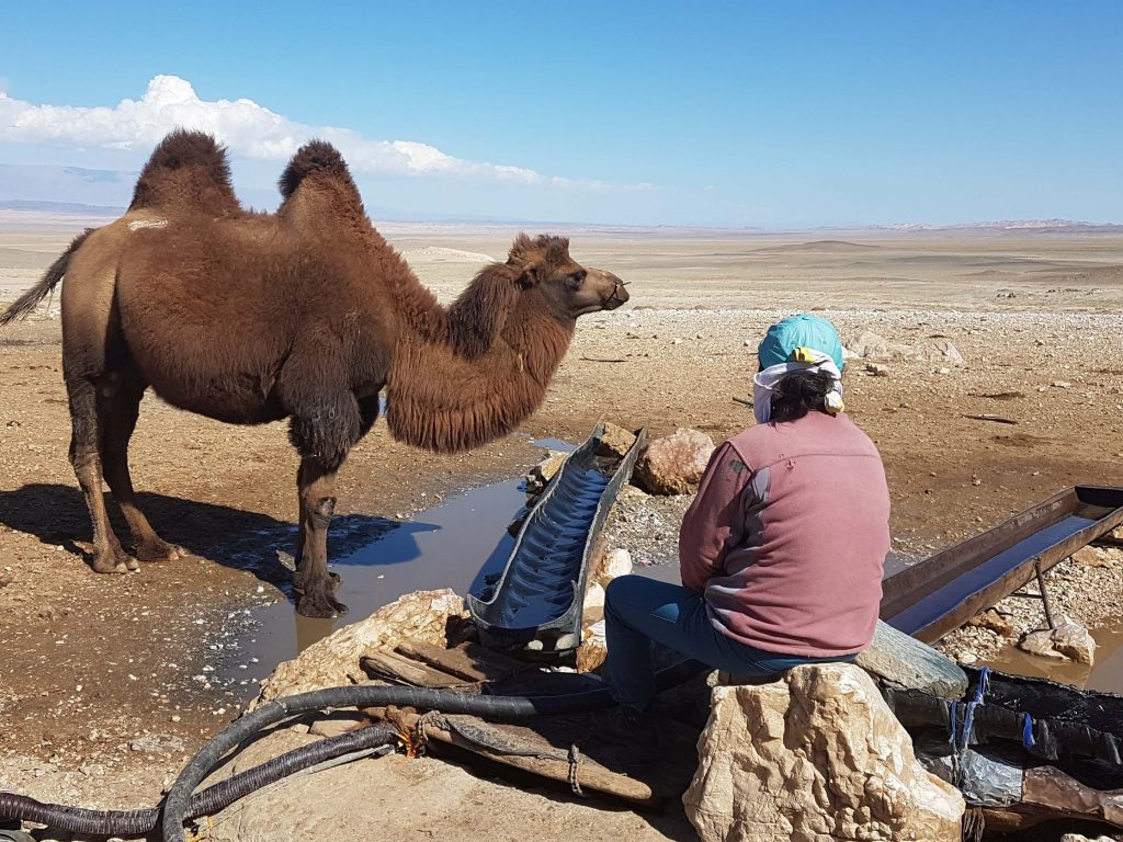 Water well in Gobi with camels