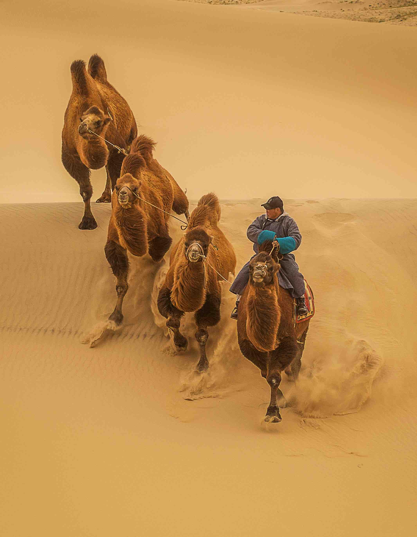 Kamel Nomade