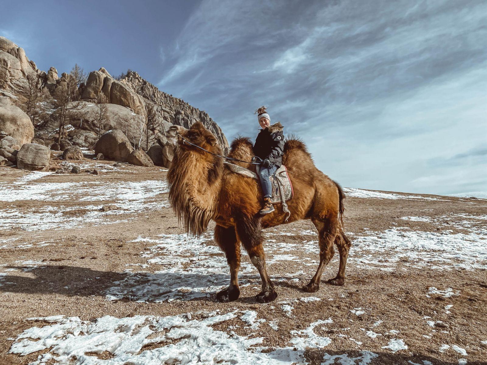 Gobi Desert Camel